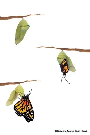 butterflyspots