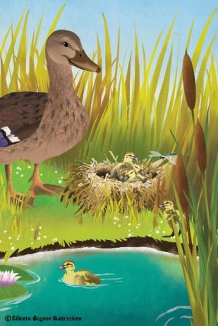 ducksfullpage
