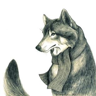 Grey Wolf ~ pencil