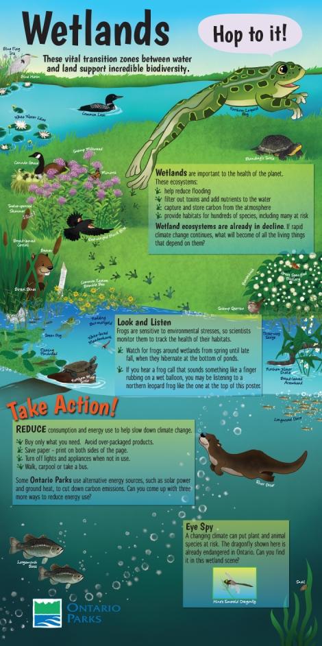 Wetland poster